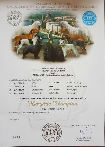 Hungarian Champion diploma for landseer Kiara