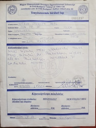 FCI certificate for breeding of our landseer Kiara
