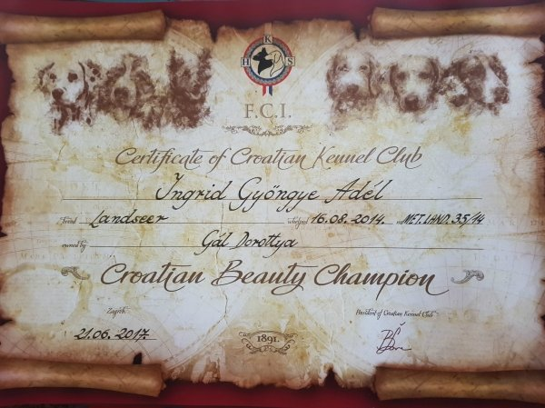 Croatian Champion diploma for landseer Kiara